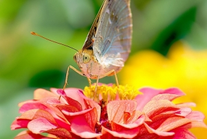 /O paraíso das borboletas IV