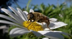 """/A """"minha"""" abelha"""