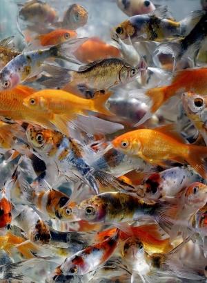Animais/Muito fish