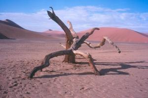 Paisagem Natural/Morte no deserto - Namibia