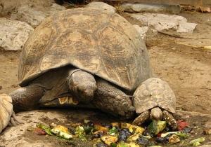 /turtles