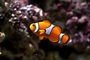 /I found Nemo...
