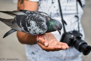 Gentes e Locais/Feeding the Birds !
