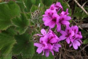 /Flores...