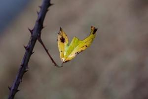 /A folha pousou no ramo