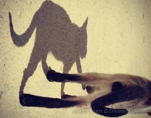 /A sombra