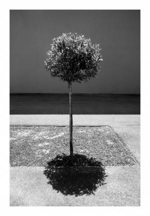 Paisagem Urbana/o loureiro e a sua sombra