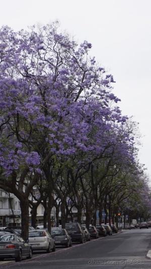 /Ruas floridas...