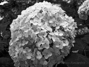 /A pureza de uma flor