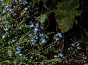 Paisagem Natural/Flores no Passadiço