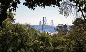 /A Ponte Entre a Vegetação