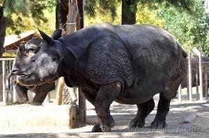 /Zoo de  Lisboa DXXVI