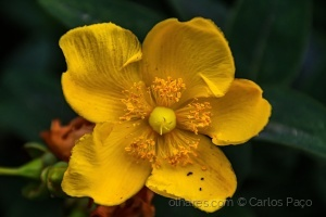 /Amarelo !