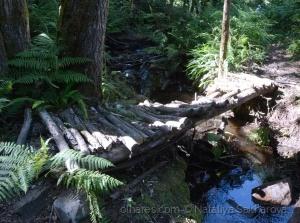 /Pelo caminho junto a um ribeiro perdido
