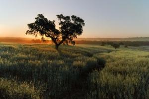 Paisagem Natural/Luz da manhã no Atentejo