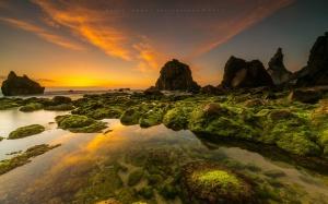 Paisagem Natural/Relva oceânica