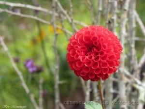 /Flor solitária