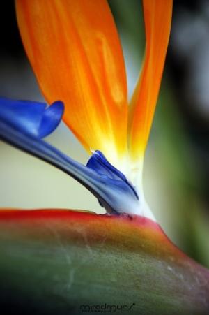 Macro/A Natureza é Bela .1