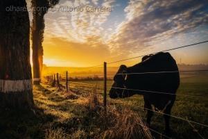 /O sol nasce para todos (...)