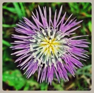 /Flor de campo!