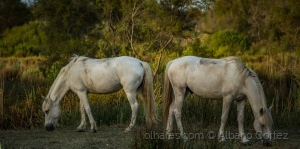 Animais/Horses with no name..