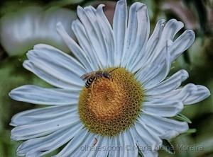 /Em busca do nectar