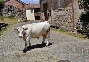 Outros/Obstáculos das ruas rurais!