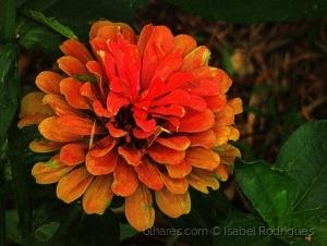Outros/apenas uma flor....