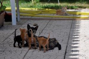 Animais/De rabo alçado