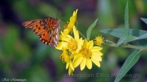 /Néctar