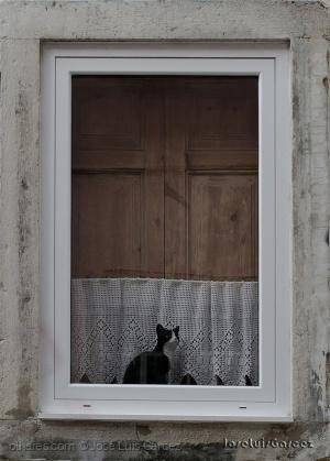 Outros/Janela com Gato