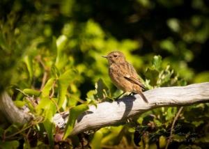 /Bird1