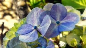 Macro/Flower! !