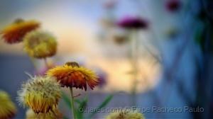 Paisagem Natural/Flower Power