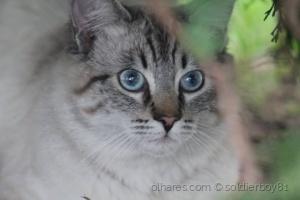 /gato