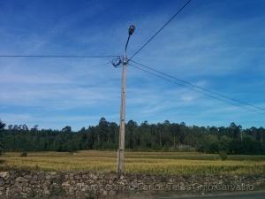 Paisagem Natural/Campo de milho