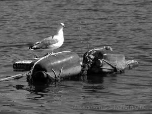 /embarcação alternativa