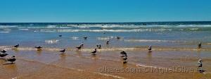 Outros/Gaivotas na praia