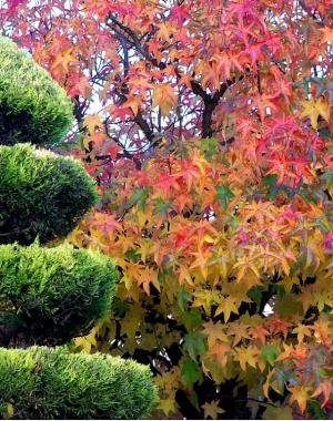 /Policromia do Outono I