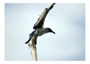 /Volare...