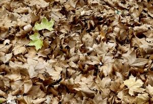 Abstrato/Outono Quente