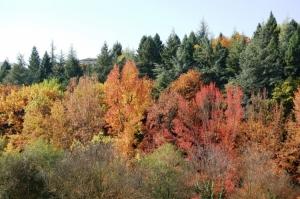 Paisagem Natural/Cores de Outono1