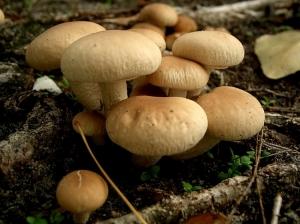 /cogumelos & cogumelos