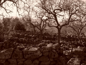 Paisagem Natural/walls and almond-trees