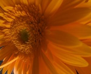 /flower...