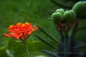 /Flor e fruto
