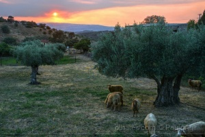 /Retrato rural