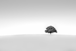 /The Tree in negative space.