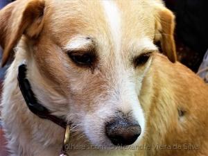 Animais/Cão(panhia)...