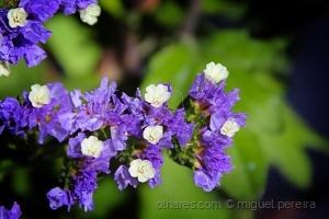 Outros/Flor[19]